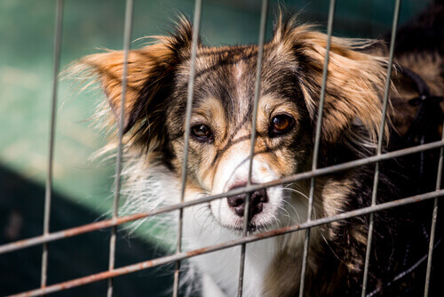 Conheça o cãozinho que auxilia na arrecadação de recursos para abrigos de animais