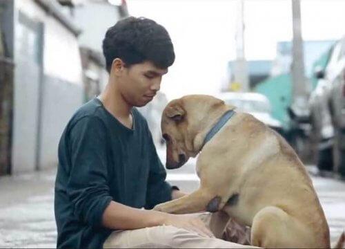 Um jovem dá o primeiro abraço em cães sem-teto