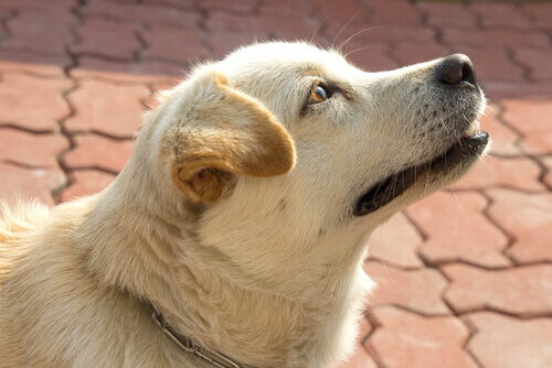 Os cães sabem que horas são? Sim, pelo nariz!