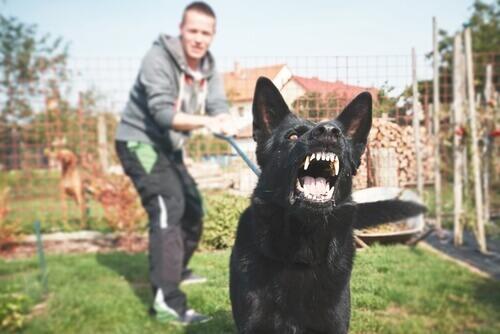 Como adestrar um cachorro potencialmente perigoso?