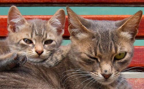 Quanto tempo vivem os gatos?