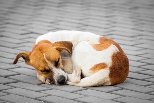 Cão deitado dormindo na calçada