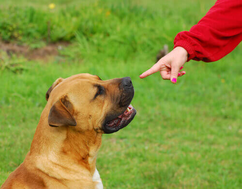 dona com dedo apontando para o cão