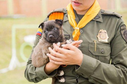 Uma série homenageia os cães-policiais