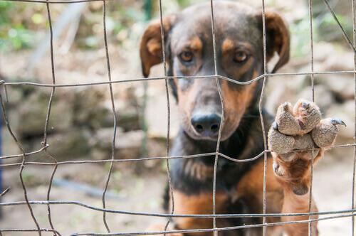 Qual é o perfil do cão abandonado?