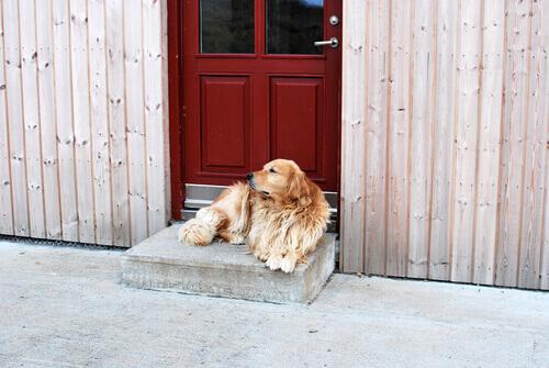 cão em frente à porta