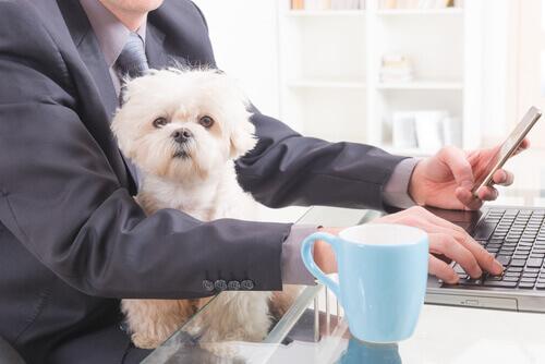 Os cães no ambiente de trabalho, uma maravilhosa companhia