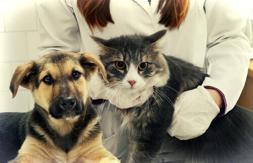 Veterinária com cão e gato