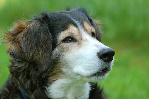 cão com um olhar desconfiado