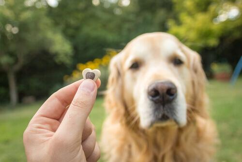 Dono oferecendo ração a um cão dominador