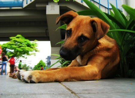 Cão arrependido, ao lado de plantas e vasos