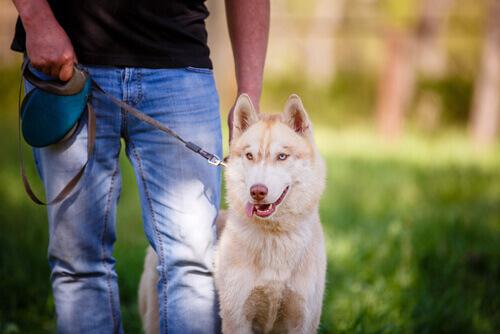 Homem com cão na coleira
