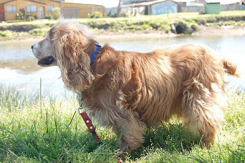 cão de coleira na grama