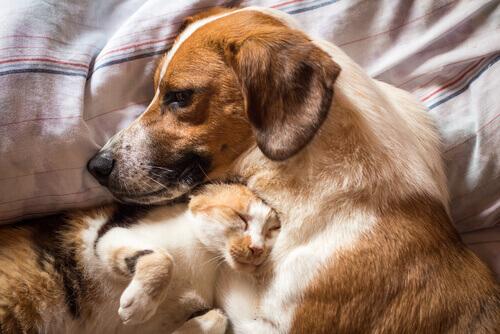 O tratamento da diarreia em cães e gatos