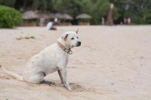 Conheça os sintomas da epilepsia em cães