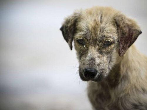 cão com expressão triste
