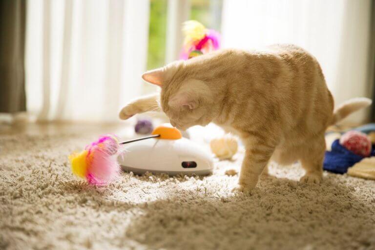gato brincando com uma pena