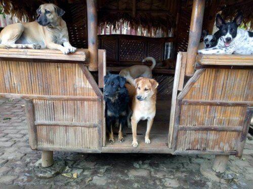 Abrigo para cães
