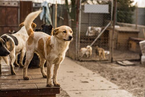 Cães num abrigo para animais