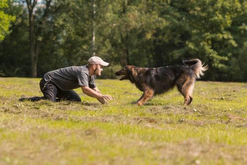 Homem adestrando seu cão no parque