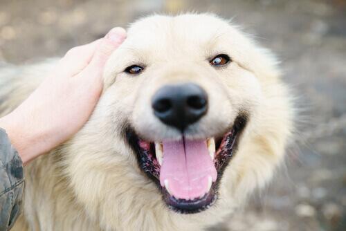 10 razões pelas quais eu amo loucamente meu cão