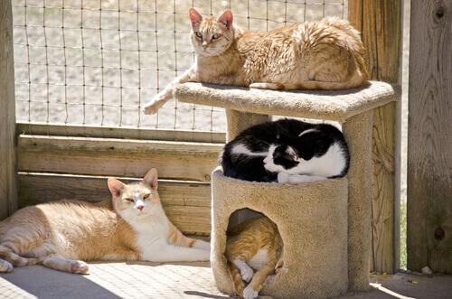 Gatos dormindo em tocas