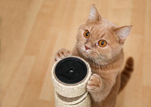 Gatinho usando um arranhador
