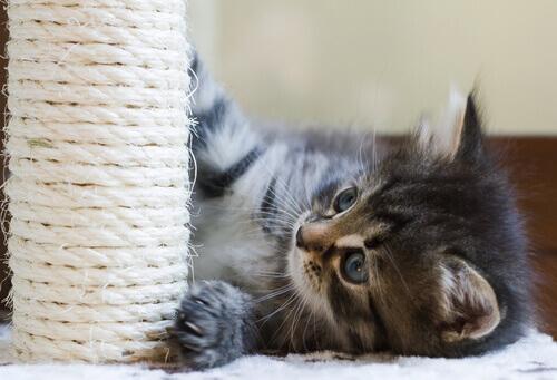 Arranhador para gatos: ensine-os a usar