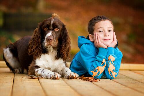 Descubra como os cachorros podem ajudar crianças na sala de aula