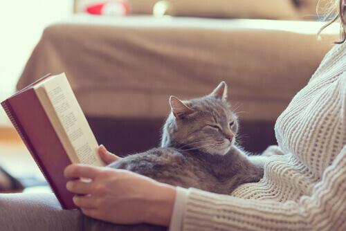 10 benefícios de se ter um gato em casa