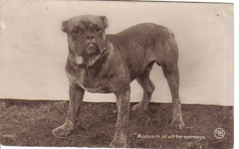 Bullenbeisser: uma das raças extintas de cães