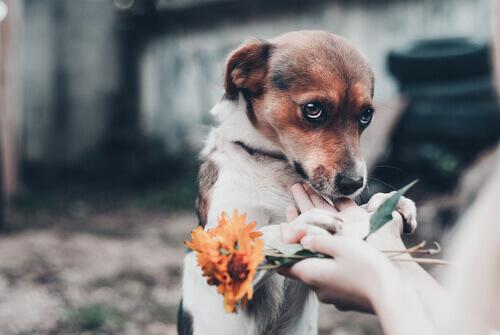 Filhote de cão com olhar meigo e mãos segurando flores