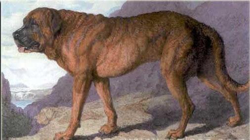Raças de cães extintas