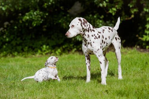 Os cães mais bonitos do planeta