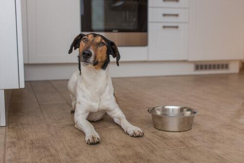 Cachorro na cozinha, ao lado de sua vasilha de comida