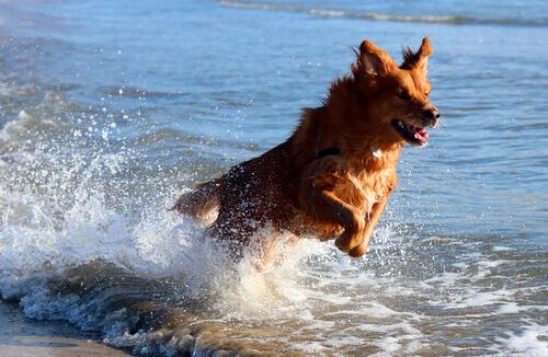 Cão brincando na praia
