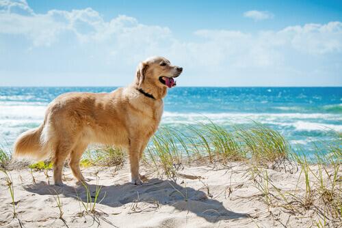 Conheça praias que aceitam cães na Espanha e em Portugal