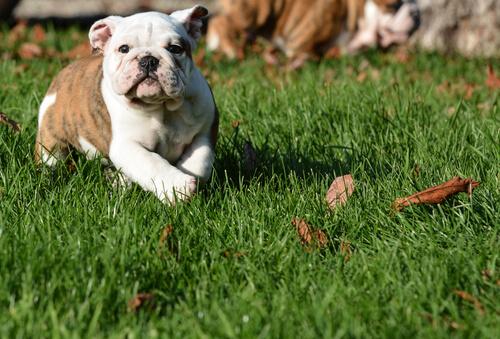 Filhote de cão deitado na grama