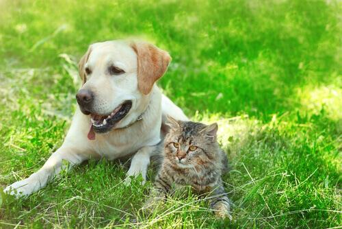 As amizades mais bonitas entre cachorros e gatos