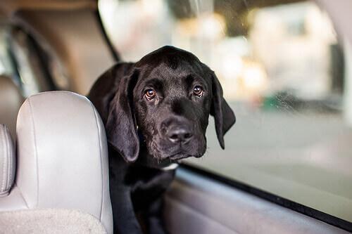 Viajar com o cachorro no carro: conselhos e cuidados