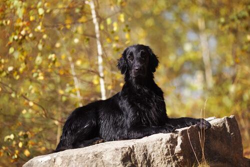 Cachorros e bruxaria: resumo histórico