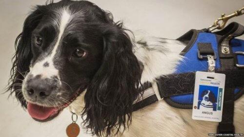 Conheça os cães que caçam superbactérias em um hospital canadense