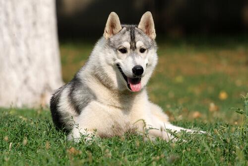 Os cachorros têm inteligência emocional?