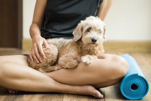 cão em reabilitação com sua dona e tapete de ioga