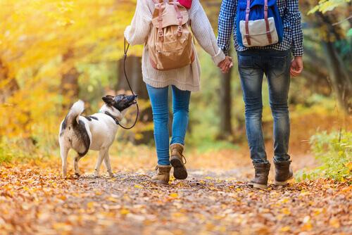 Casal passeando com cachorro pelo parque