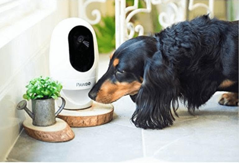 cão cheirando pawbo