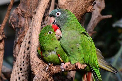 Casal de pássaros numa árvore