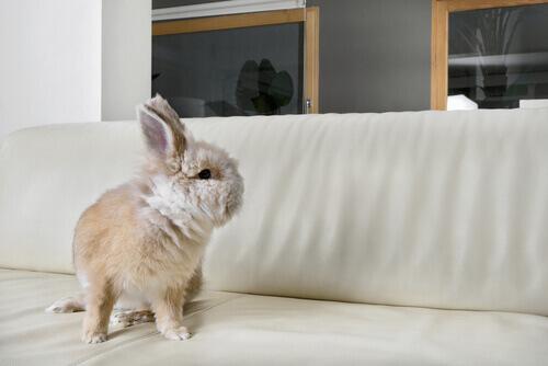 coelho em cima da cama