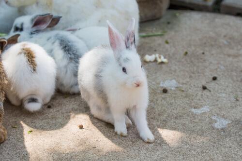 Ter coelhos em casa: conselhos de higiene