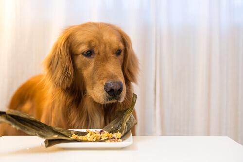 Você sabia que existe comida congelada para cachorro?
